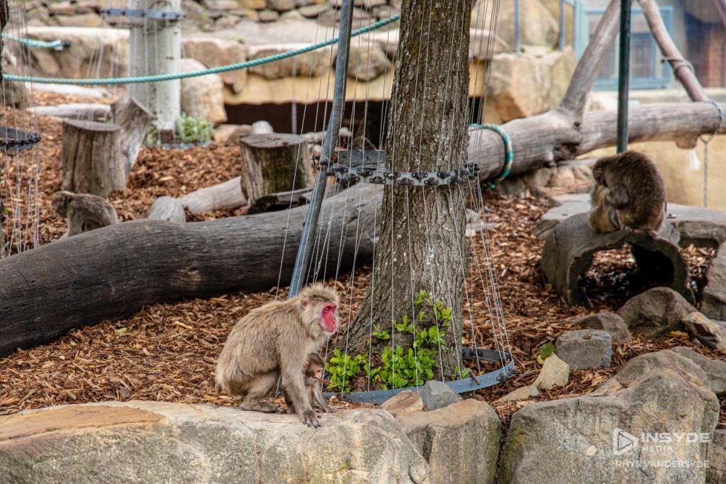 Launceston City Park - Monkeys