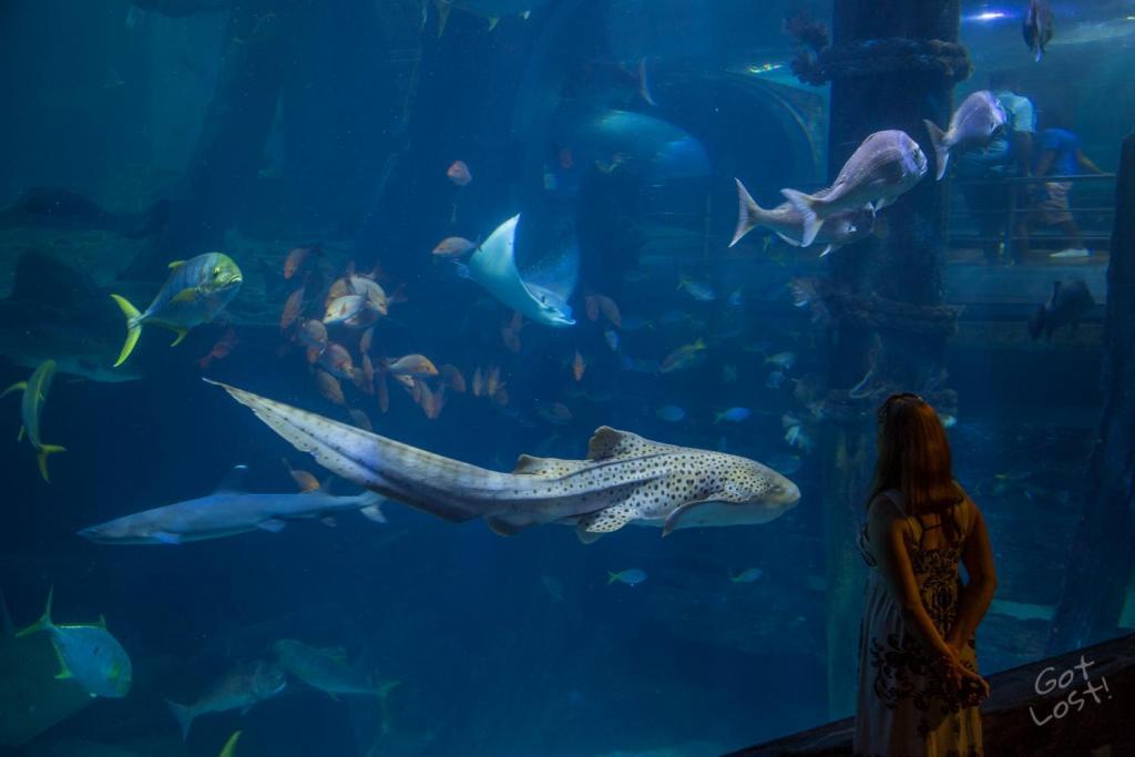 Melbourne SeaLife Aquarium